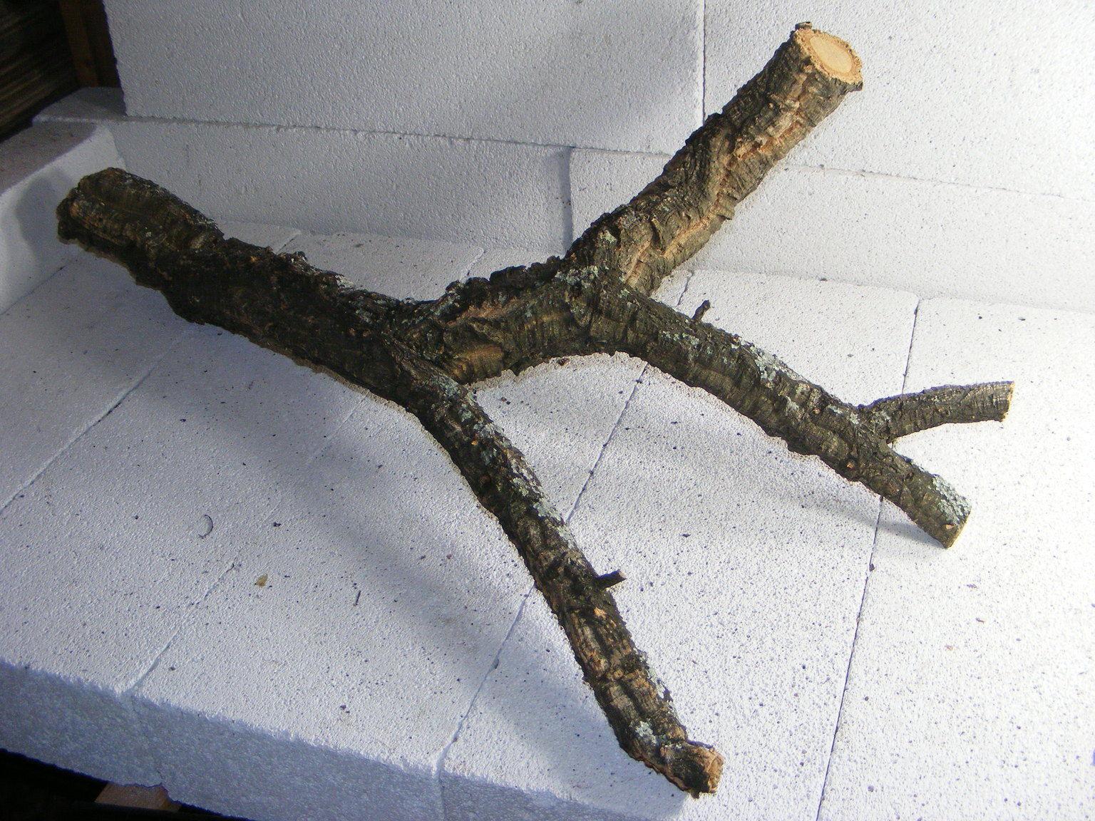 Korkast Korkeichen Ast 80 46 Cm Dekoration Terrarium R1a8