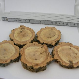 5-Stk-Kork-Astscheibe-ca-6×1-2-cm-Korkeichen-Scheibe-geschliffen-C1-6-222065991604